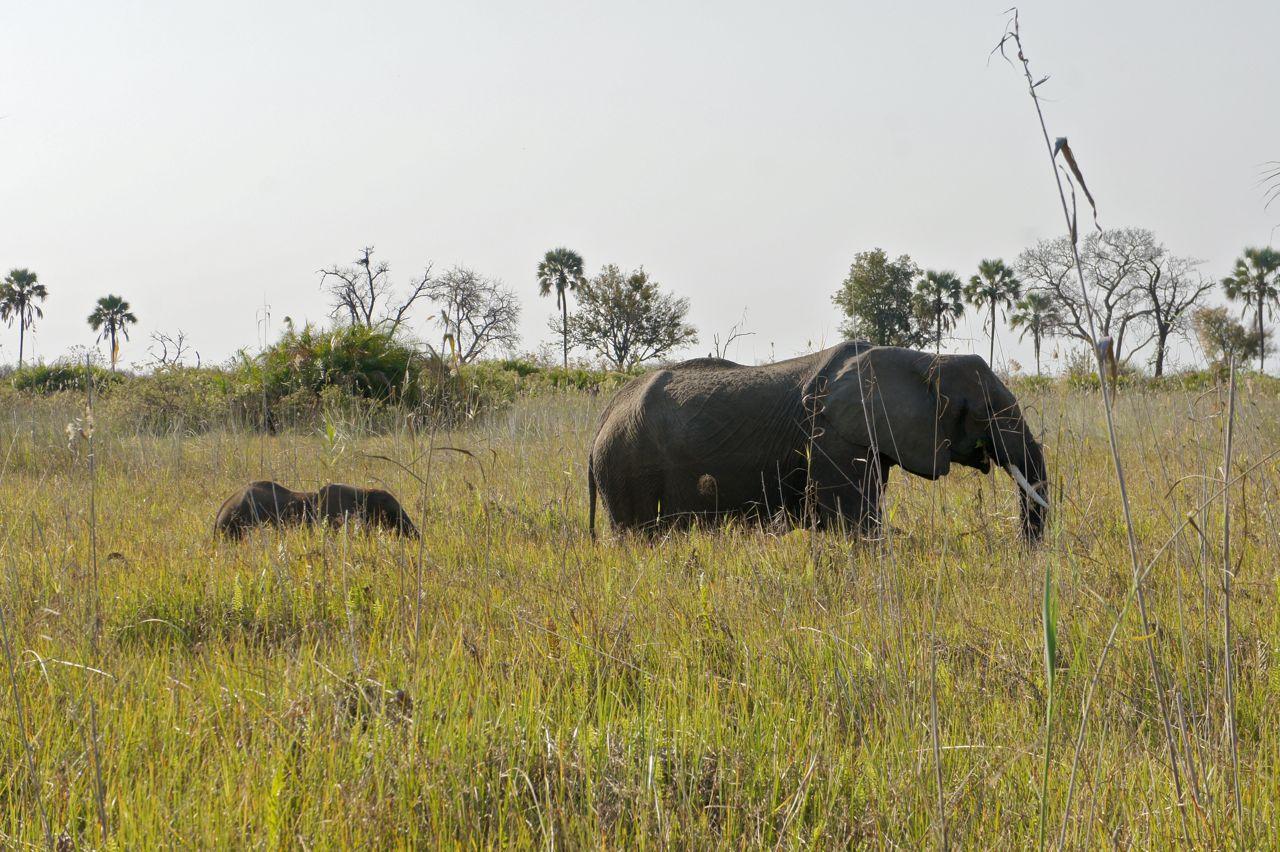 África Minha-Diário de uma viagem-capítulo 9