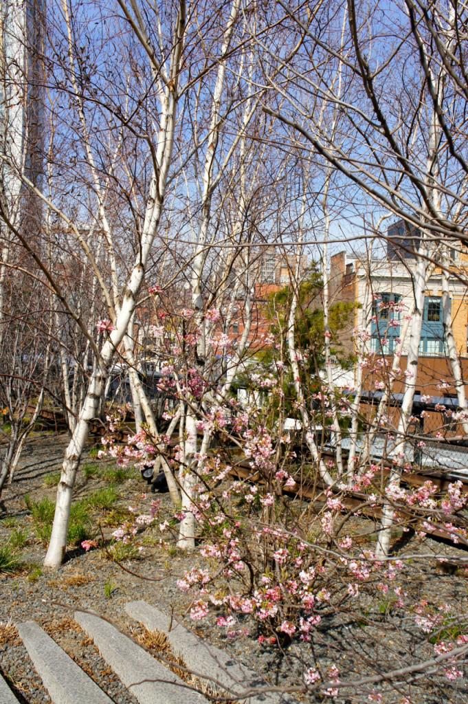 A primavera chegando.