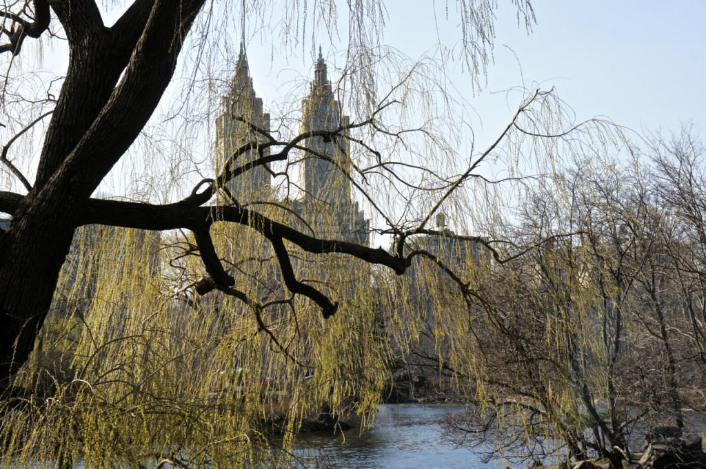 O Central Park oferece vistas e sensações absurdamente fantásticas...a qualquer momento do ano.