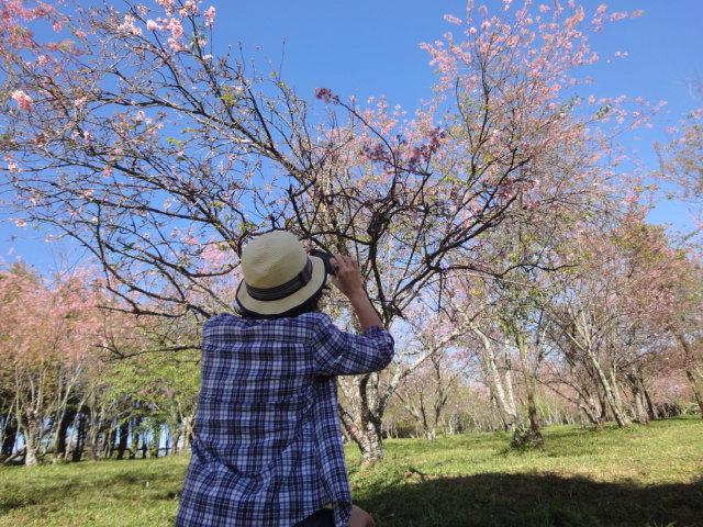 Apaixonada pelas cerejeiras. Foto da minha amiga Rachel Manduca