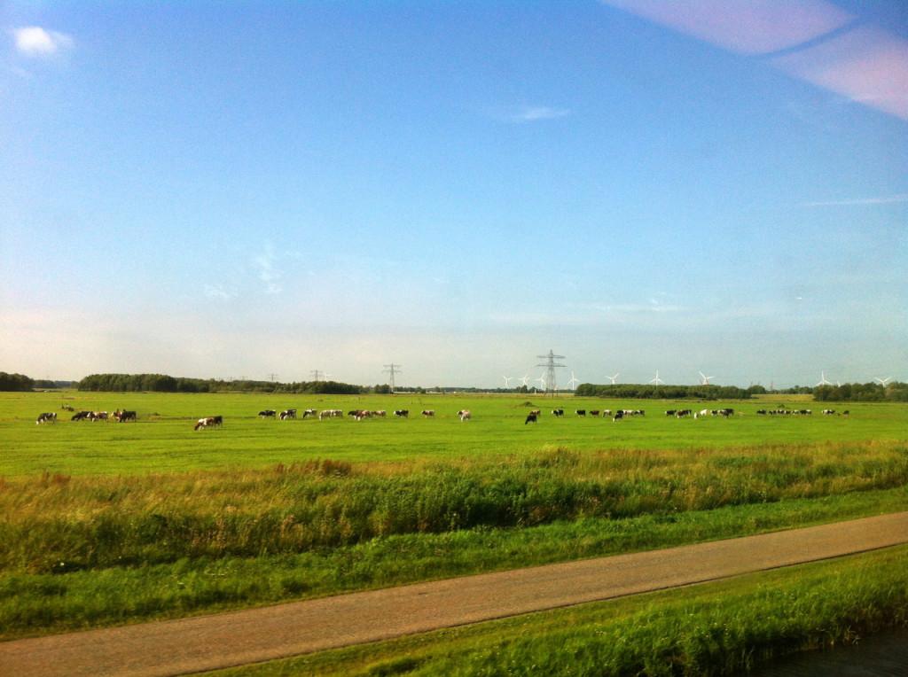 Ahhhh as vaquinhas holandesas! Tirei essa foto do trem