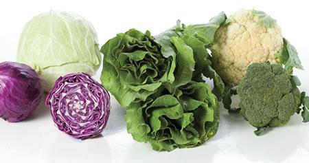 repolho couve brócolis