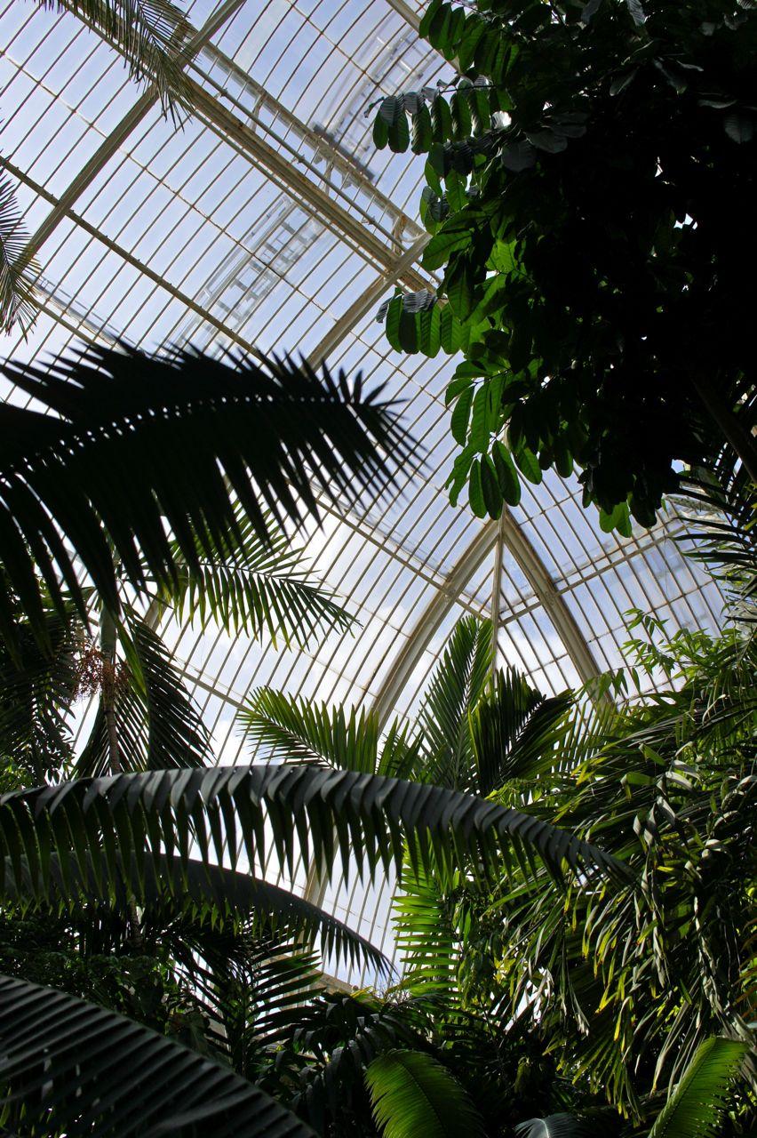Dentro da estufa Palm House com clima e plantas tropicais.