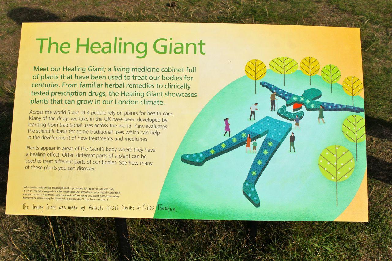 Com seu canteiro em forma do corpo humano que apresenta e explica as várias ervas medicinais.
