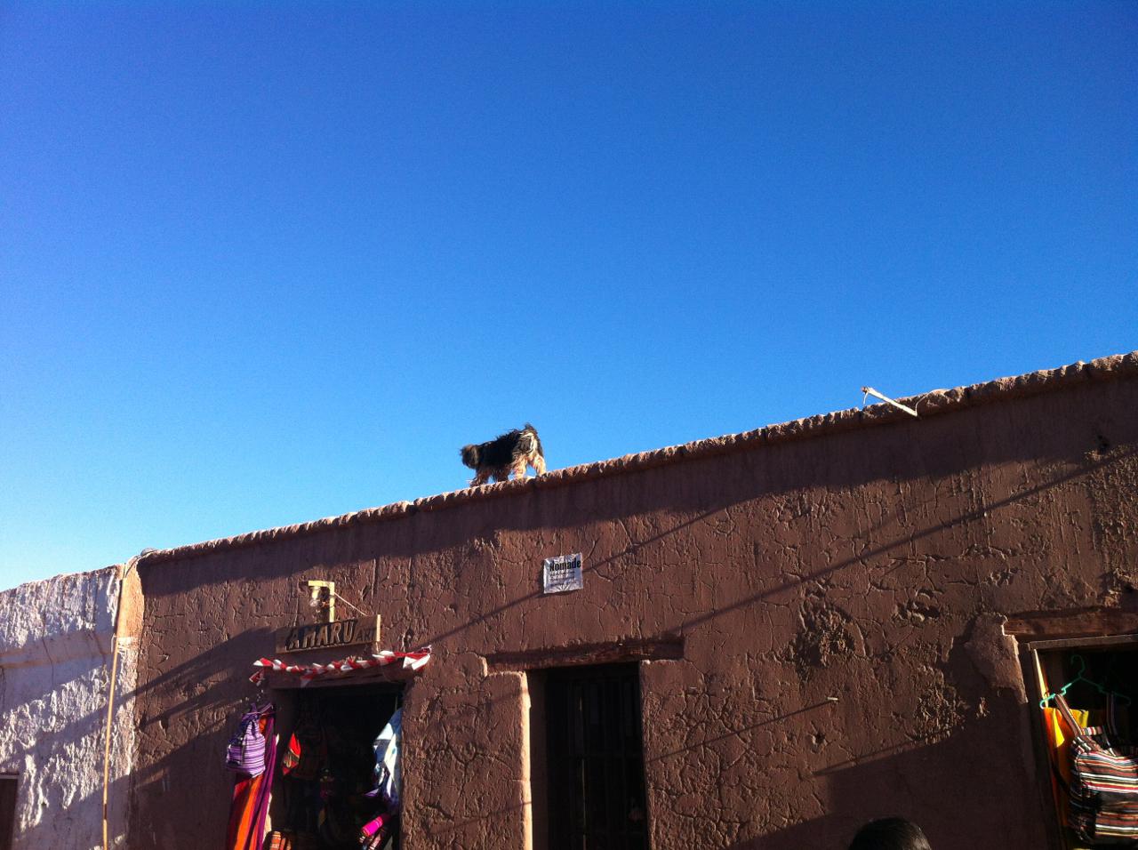 E aqui o cachorro também sobe no telhado. Interessante notar (e valorize isso) as construções, restaurantes e hotéis que respeitam o meio ambiente e usam o adobe, material do próprio Atacama. O aspecto é mais rústico e simples, mas o processo é o mais correto.