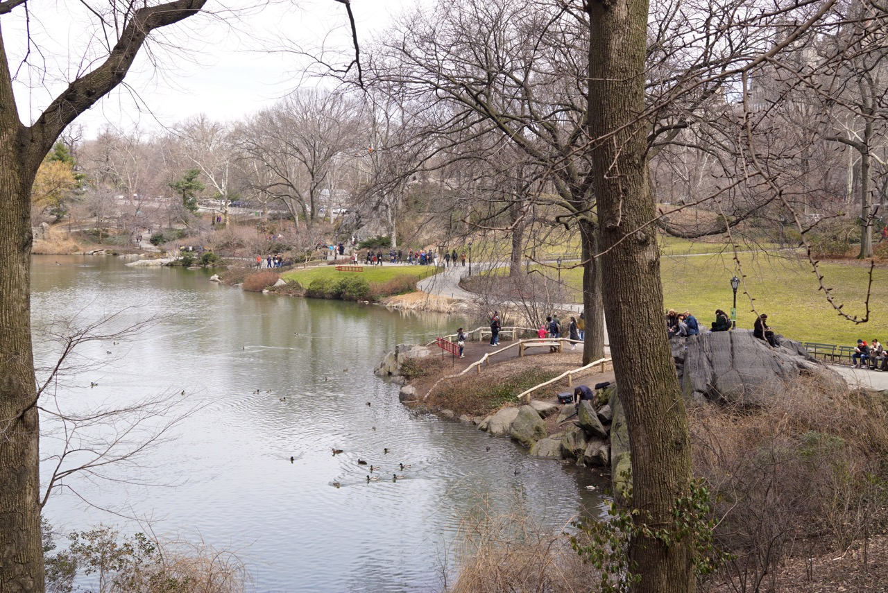 Central Park com a vegetação ainda hibernando....
