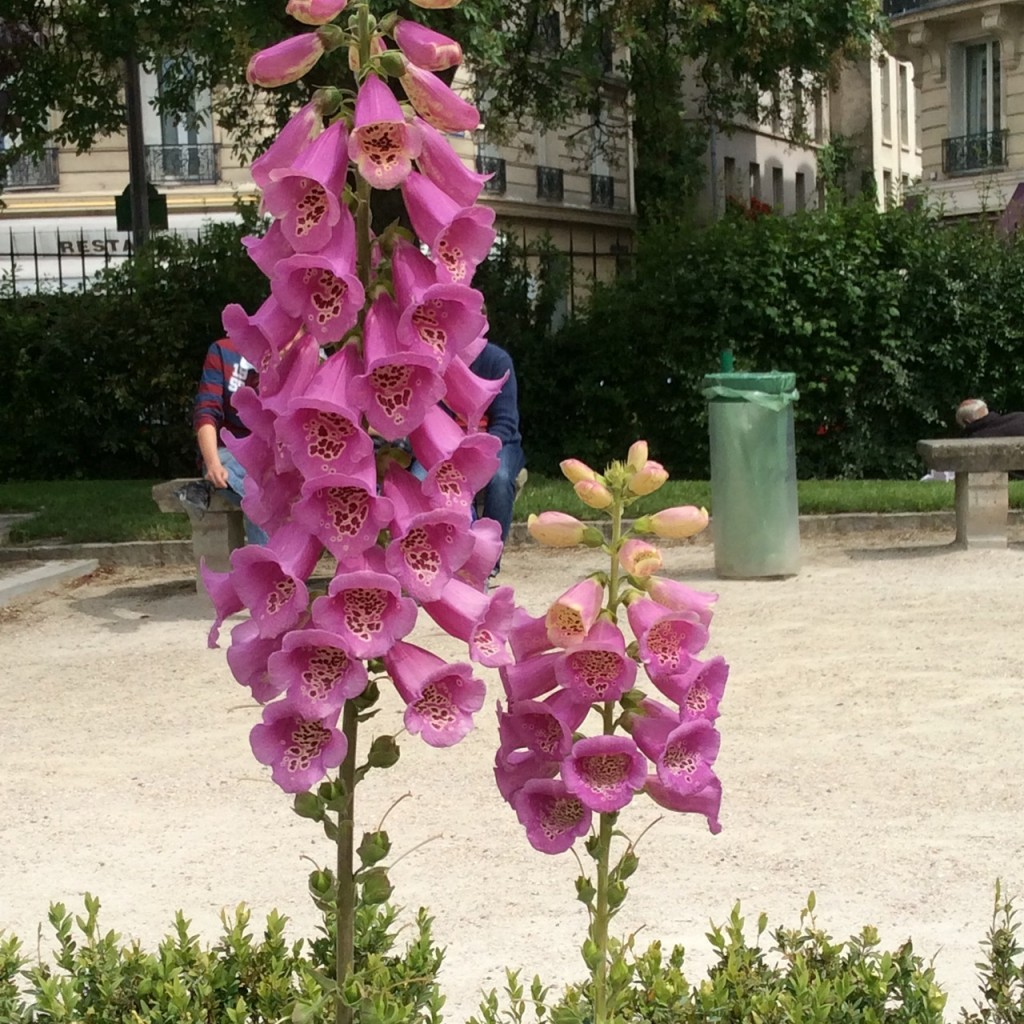As flores de maio....