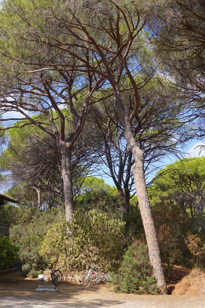 O bosque de Roccamare
